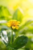 Закройте вверх по предпосылке цветков Стоковые Фотографии RF
