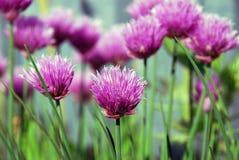 Закройте вверх по предпосылке цветков Стоковое Изображение RF