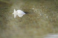 Закройте вверх по раковине на пляже Стоковые Фото