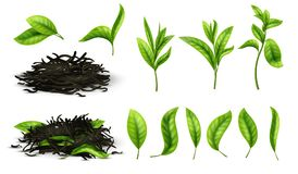 Закройте вверх по реалистическим высушенному чаем комплекту вектора трав и листьев чая зеленых цветов изолированному бесплатная иллюстрация