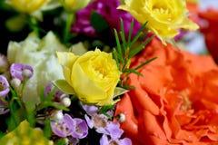 Закройте вверх по саду цветков розы желтого цвета стоковые изображения