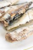 Закройте вверх по сардинам, который marinated макросом служат на плите Стоковая Фотография RF