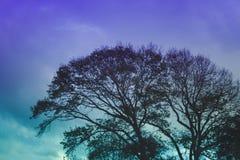 Закройте вверх по силуэту дерева против неба зимы Стоковая Фотография RF