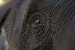Закройте вверх по слону Азии глаза Стоковые Фото