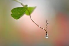 Закройте вверх по супер падению воды съемки макроса на лист и цветке Стоковое Фото