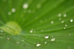 Закройте вверх по супер падению воды съемки макроса на лист и цветке Стоковые Изображения