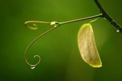 Закройте вверх по супер падению воды съемки макроса на лист и цветке Стоковые Фото