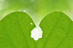 Закройте вверх по супер падению воды съемки макроса на лист и цветке Стоковые Фотографии RF