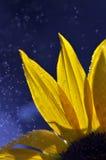 Закройте вверх по супер падению воды съемки макроса на лист и цветке Стоковое Изображение RF