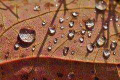 Закройте вверх по супер падению воды съемки макроса на лист и цветке Стоковая Фотография RF