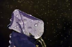 Закройте вверх по супер падению воды съемки макроса на лист и цветке Стоковые Изображения RF