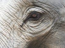 Закройте вверх по съемке глаза ` s слона с частями головы, уха, шеи, и хобота с естественной сморщенной текстурой Стоковые Изображения RF