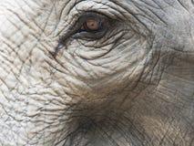 Закройте вверх по съемке глаза ` s слона с частями головы, уха, шеи, и хобота с естественной сморщенной текстурой Стоковое Фото