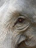 Закройте вверх по съемке глаза ` s слона с частями головы, уха, шеи, и хобота с естественной сморщенной текстурой Стоковые Изображения