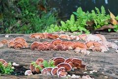 Закройте вверх по съемке гриба на древесине тимберса Стоковое Изображение RF
