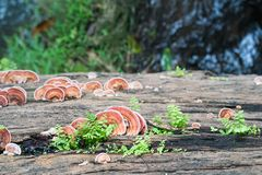 Закройте вверх по съемке гриба на древесине тимберса Стоковое Фото