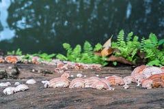 Закройте вверх по съемке гриба на древесине Стоковые Изображения