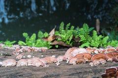 Закройте вверх по съемке гриба на древесине Стоковая Фотография