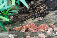 Закройте вверх по съемке гриба на древесине Стоковые Фотографии RF