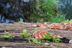 Закройте вверх по съемке гриба на древесине Стоковые Изображения RF