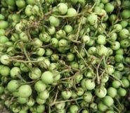 Закройте вверх по съемке зеленых Aubergines младенца стоковое фото rf