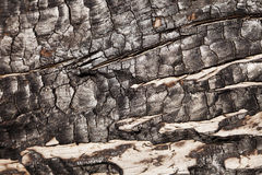 Сгорели деревянный макрос Стоковое Изображение RF