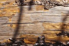 Дерево, ствол дерева, хобот, журнал, селективный фокус, фокус на foregrou Стоковые Фотографии RF