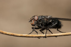 Закройте вверх по съемке мухы Стоковые Изображения