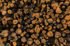 Закройте вверх по съемке штабелированных журналов дерева Стоковая Фотография RF