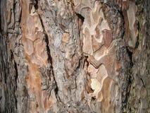 Закройте вверх по текстуре кожи дерева стоковое фото rf