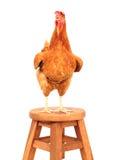 Закройте вверх по телу портрета полному коричневой курицы яичек женщины стоя sh Стоковые Фото