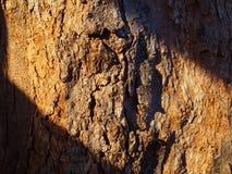 Закройте вверх по трудной корке расшивы ствола дерева, теплой нашивке диагонали солнечного света Стоковое фото RF