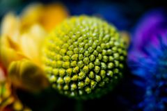 Закройте вверх по фотографии на цветке в букете Стоковая Фотография