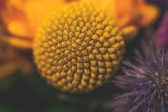 Закройте вверх по фотографии на цветке в bouqet Стоковое фото RF