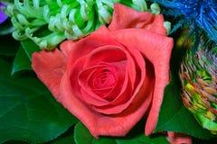 Закройте вверх по фотографии на цветке в bouqet Стоковое Изображение RF