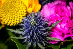 Закройте вверх по фотографии на цветке в bouqet Стоковые Фотографии RF