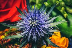 Закройте вверх по фотографии на цветке в bouqet Стоковые Изображения