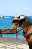 Закройте вверх по фото головки лошади Стоковые Изображения RF
