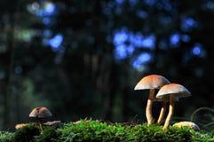 Закройте вверх по фото одичалого гриба на мхе Стоковые Изображения