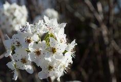 Закройте вверх по фото одичалых белых цветков зацветая в ярком солнце Стоковое Изображение