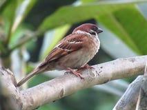Закройте вверх по фото птицы на ветви дерева Стоковое фото RF