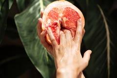 Закройте вверх по фото рук молодой женщины держа половину грейпфрута с большими зелеными листьями на предпосылке Фото рук Стоковое Изображение