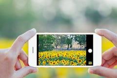 Закройте вверх по фото телефона пользы руки передвижному принимая Стоковая Фотография RF