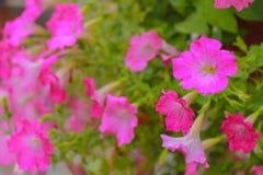 Закройте вверх по цветкам на предпосылке природы Стоковое Фото