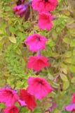 Закройте вверх по цветкам на предпосылке природы Стоковая Фотография