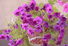 Закройте вверх по цветкам на предпосылке природы Стоковые Фото