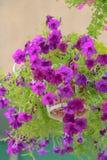 Закройте вверх по цветкам на предпосылке природы Стоковые Фотографии RF