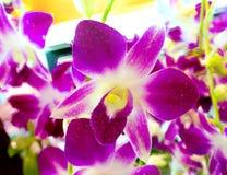 Закройте вверх по цветкам орхидеи цветеня фиолетовым в естественном backgroun сада Стоковая Фотография RF
