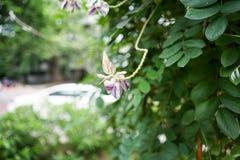Закройте вверх по цветку в полдень в парке или саде с backgrou нерезкости стоковая фотография