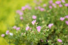 Закройте вверх по цветку в полдень в парке или саде с backgrou нерезкости стоковые изображения